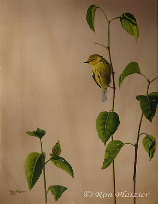 "Yellow Warbler 14""x11""- Sold"