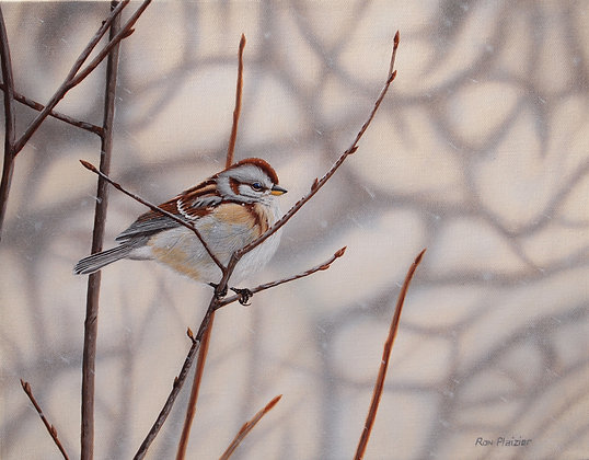 "Tree Sparrow - 11""x14"" - SOLD -"