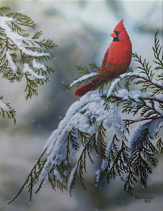 "Winter Cardinal  20""x16"" - SOLD-"