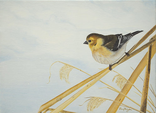 "Winter Gold - Gold Finch - 9""x12"" framed original"