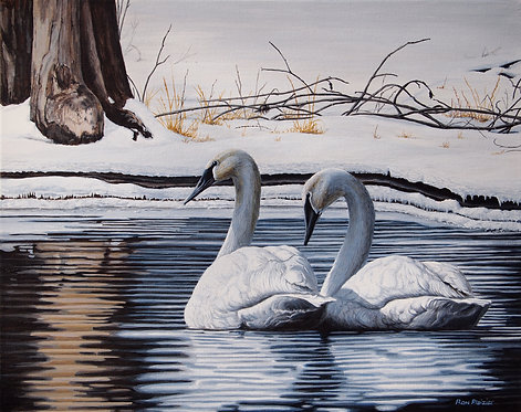 """Trumpter Swans - 16""""x20"""" framed original"""