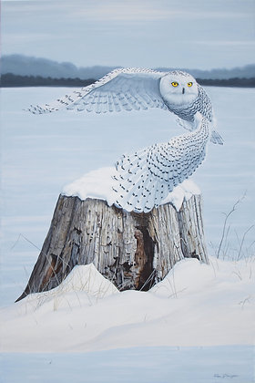 "Snow Angel - 36""x24"" - SOLD -"