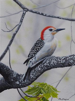 """Red-bellied Woodpecker - 12""""x9"""" -SOLD-"""
