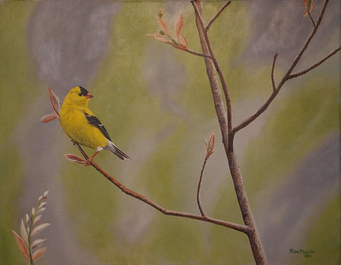 "Gold Finch 11""x14"" sold"