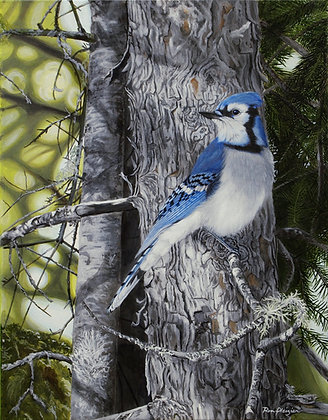 "Forest Veil - Bluejay - 18""x14"" - SOLD"