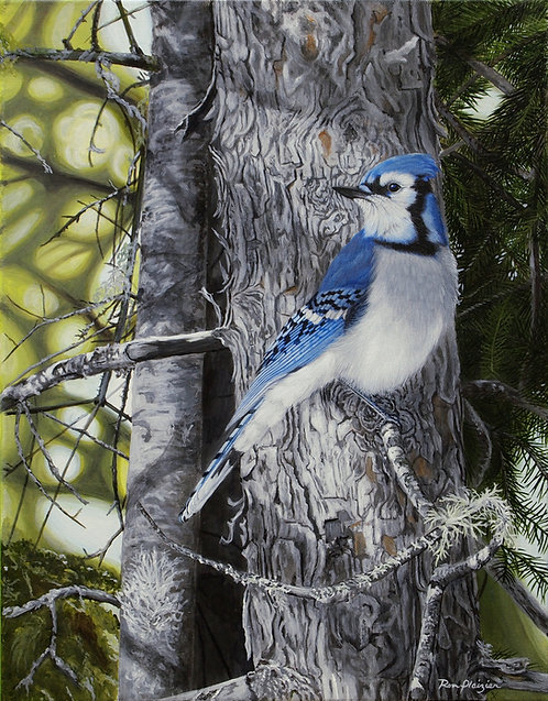 """Forest Veil - Bluejay - 18""""x14"""" - SOLD"""