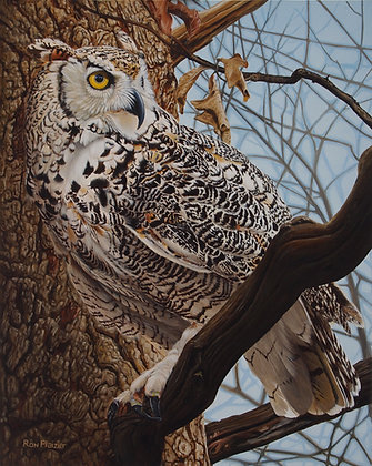 Attentive Observer - Horned Owl -SOLD-