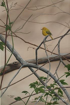 """Yellow Warbler 18""""x14"""" - framed original"""