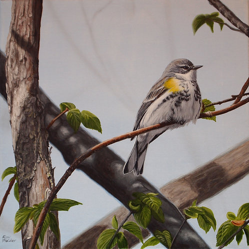 "Yellow-rumped Warbler #1 12""x12"" - Sold -"