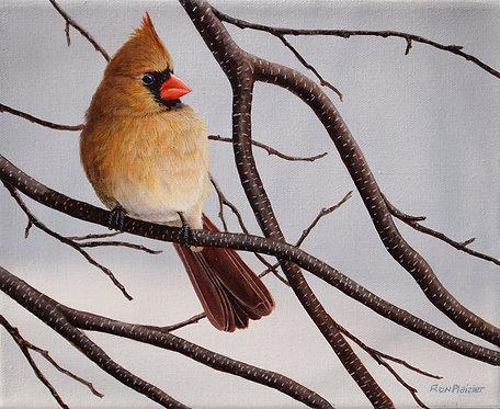 "Female Winter Cardinal - 8""x10""sold"