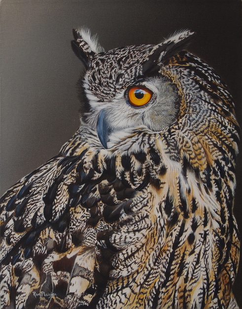 Ron Plaizier - Eurasion Owl fb