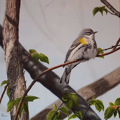 """Yellow-rumped Warbler #1 12""""x12"""" - Sold -"""