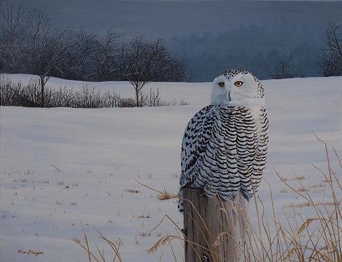 "Snowy Veil - 14""x18"" Print"