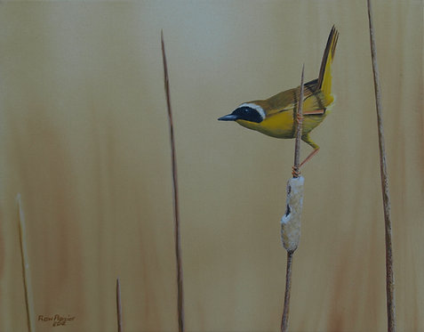 """Yellow Throated Warbler #1 14""""x11"""" donated"""