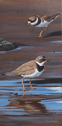 """Semipalmated Plovers - 6""""x12""""  - SOLD -"""