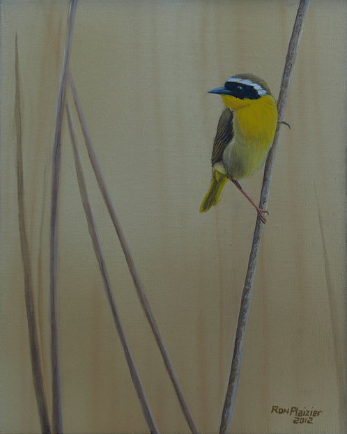 """Yellow Throated Warbler #2 10""""x8"""" sold"""