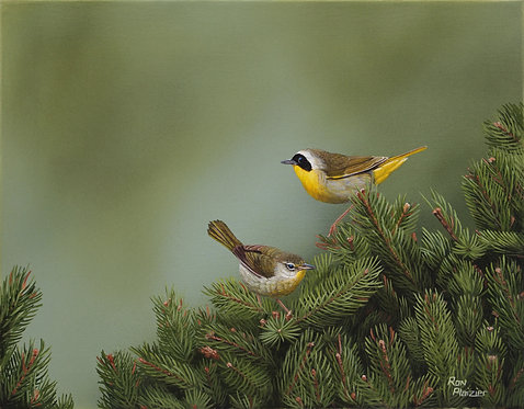 """Common Yellowthroat Warbler - 14""""x11"""" - SOLD"""