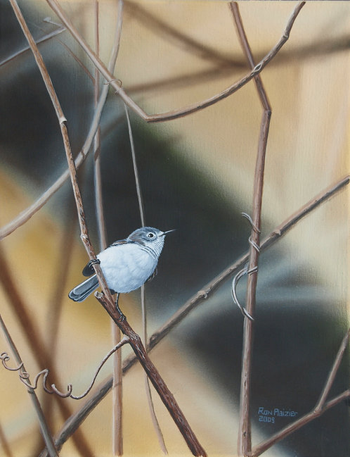 "Grey Gnatcatcher 14""x18"" framed original"