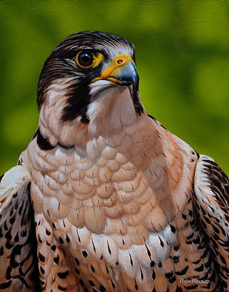 Intensity - Peregrine  - Sold