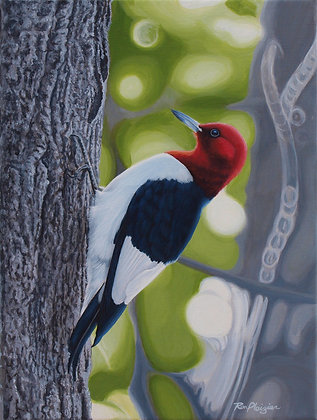 "Red-headed Woodpecker - 12""x9"" -SOLD-"
