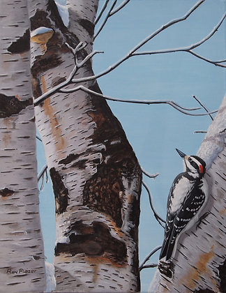 "Amongst the Birch 11""x14"" -SOLD-"
