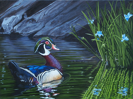 "Calm Waters II - Wood Duck 12""x16"" Original Framed"