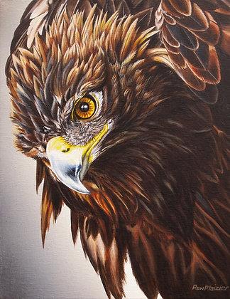 Intense Outlook - Golden Eagle - SOLD -