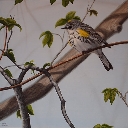 "Yellow-rumped Warbler #2 12""x12"" - SOLD -"