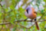 טיול אווזים בבולגריה