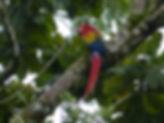 טיול טבע וצפרות בקוסטה ריקה