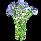 pianta-del-lino-55455321_edited.png