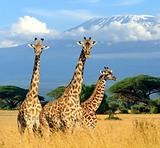 ケニア.png