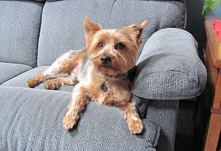 Bentley on the sofa.