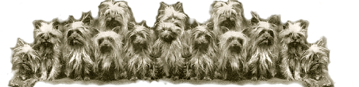 Group of Yorkies for Footer logo