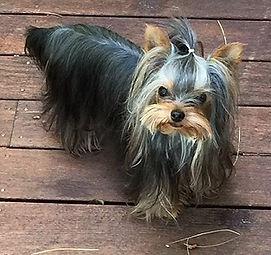 Forever Foster dog PolkaDot