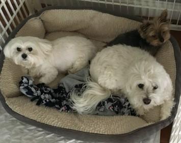 Nora, Jackson & Wally Snuggling