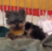 Forever Foster dog Pixie