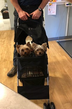Oliver and Donny in stroller