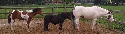 coaching heerde, therapie Heerde, paardencoach Heerde , paardencoach Gelderland, therapie Gelderland, pastoraat, christelijke coach, therapie christen