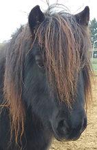 coachpaard, coaching met paarden, therapie met paarden, pastoraat met paarden