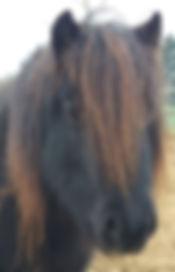 Vicky coachpaard Horse2Heart Heerde Gelderland