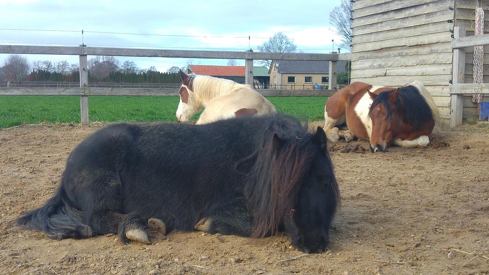 Amy in haar paardenpoep- bed