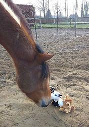 Coaching met paarden Heerde, Gelderland, therapie, pastoraat,