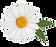 Manzanilla-2-WEB.png
