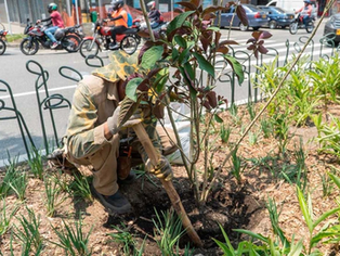 Zonas verdes de Medellín serán cuidadas por expertos del Jardín Botánico.