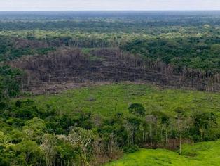 La deforestación en Colombia creció un 8 % durante 2020.