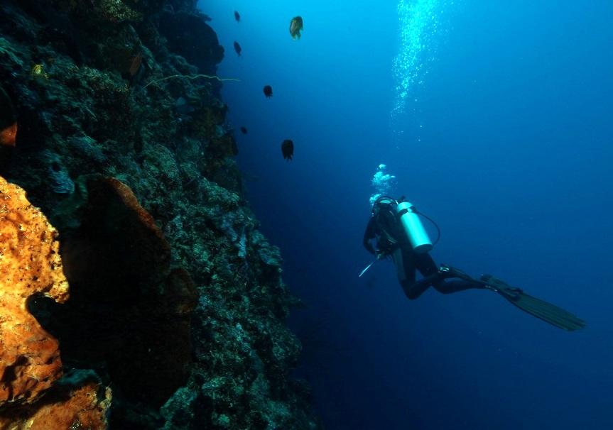 Adventure Scuba Diving Bali HUGE wall.jpg