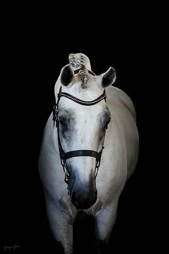 Cushavon King.jpg