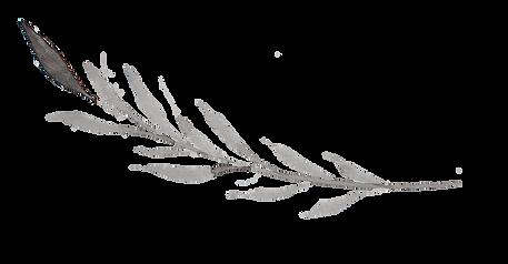 delicate-twig-04 copy.png