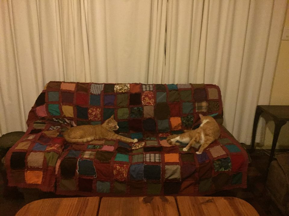 Cats enjoying rag quilt in Africa